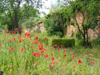 klostergarten-c-frank-koebsch