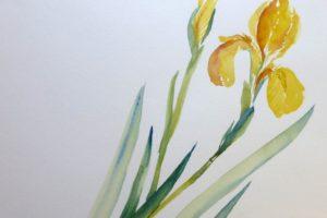 Iris-in-Gelb-(c)-Aquarell-von-Sonja-Janichsen